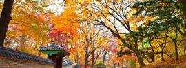 Du lịch đảo Nami Hàn Quốc: Ở đâu, ăn gì & nên đi đâu chơi?