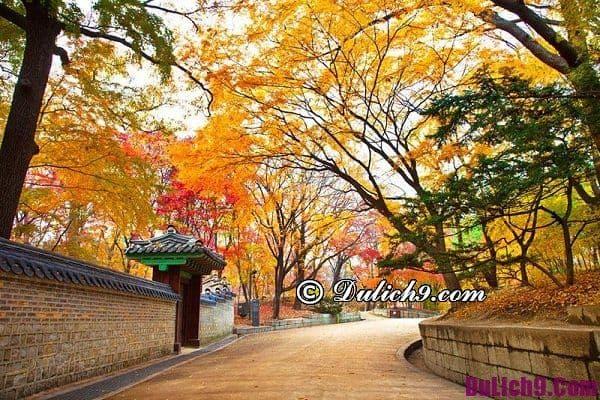Du lịch đảo Nami Hàn Quốc có gì hấp dẫn: Kinh nghiệm du lịch đảo Nami, Hàn Quốc