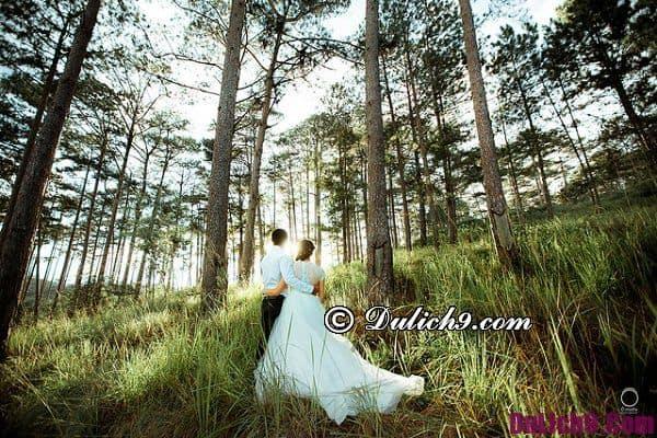 Địa điểm chụp ảnh cưới đẹp ở Đà Lạt: Những địa điểm chụp ảnh cưới miễn phí, đẹp nhất Đà Lạt