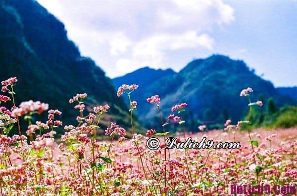 Du lịch Hà Giang tháng 10 có gì chơi? Nên tới Hà Giang chụp ảnh, ngắm cảnh vào mùa nào?