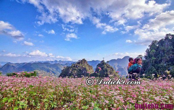 Địa điểm ngắm hoa tam giác mạch đẹp ở Hà Giang: Chụp ảnh và ngắm hoa tam giác mạch ở đâu Hà Giang đẹp, lãng mạn nhất