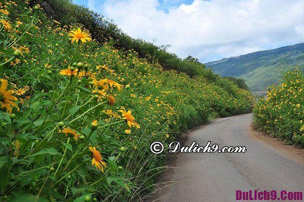 Cung đường ngắm hoa dã quỳ đẹp ở Đà Lạt: Địa chỉ chụp ảnh và ngắm hoa dã quỳ đẹp ở Đà Lạt