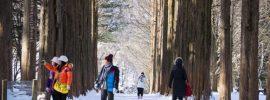 Kinh nghiệm du lịch Hàn Quốc mùa đông: Tour 5 ngày 4 đêm