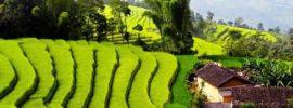 Hướng dẫn du lịch Mai Châu – Mộc Châu 2 ngày 1 đêm & chi phí