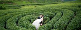 5 địa điểm chụp ảnh cưới đẹp ở Mộc Châu được yêu thích nhất