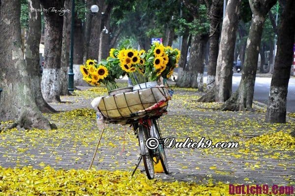 Đi du lịch Hà Nội mùa nào đẹp nhất? Thời điểm lý tưởng để đi du lịch Hà Nội