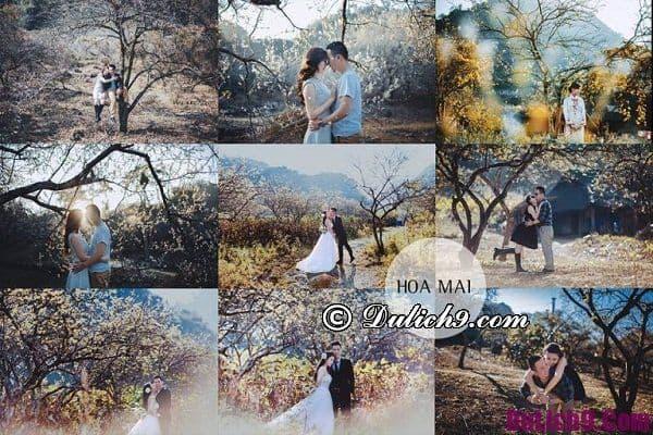 Thời điểm đẹp chụp ảnh cưới ở Mộc Châu