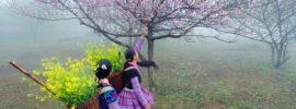 Kinh nghiệm du lịch Mộc Châu dịp tết âm lịch đáng nhớ
