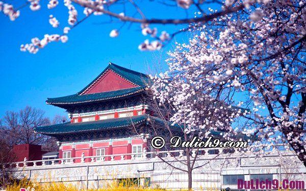 Du lịch Hàn Quốc dịp Tết Nguyên Đán nên đi chơi ở đâu?
