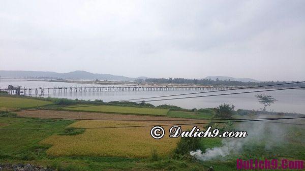 Lịch trình du lịch Phú Yên – Quy Nhơn – Quảng Ngãi 7 ngày