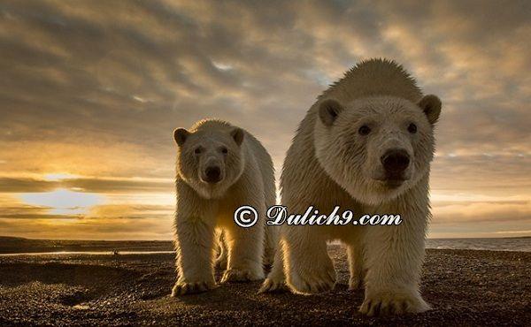 Những trải nghiệm thú vị khi du lịch Alaska: Hướng dẫn đi tham quan, vui chơi khi du lịch Alaska