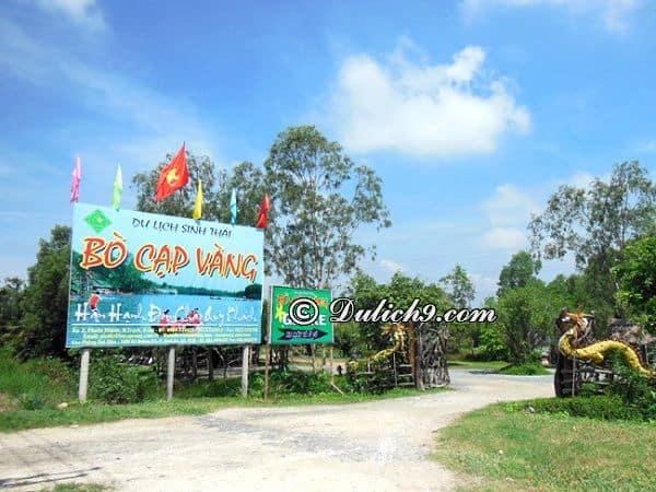 Bò Cạp Vàng ở đâu, cách Sài Gòn bao xa? Kinh nghiệm tham quan, vui chơi khi du lịch Bò Cạp Vàng