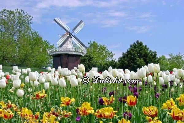 Nên du lịch Hà Lan mùa nào đẹp/ Thời điểm lí tưởng du lịch Hà Lan