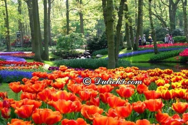Hướng dẫn lịch trình tham quan, vui chơi ở Hà Lan giá rẻ, tự túc: Du lịch Hà Lan nên đi đâu chơi? Địa điểm tham quan khi du lịch Hà Lan