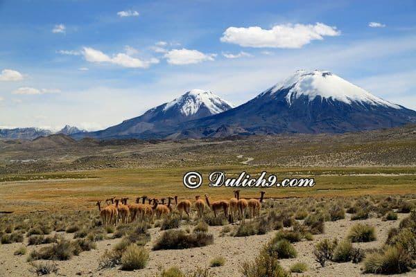 Kinh nghiệm du lịch Chile tự túc, giá rẻ: Hướng dẫn lịch trình tham quan, vui chơi, ăn uống khi du lịch Chile