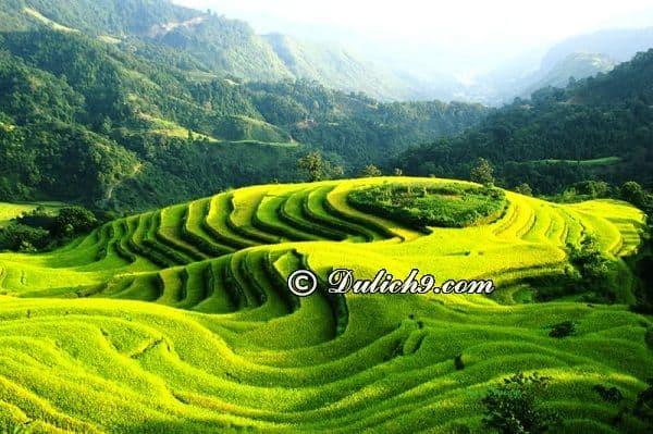 Nên đi chơi ở đâu khi du lịch Hà Giang? Ghé thăm ruộng lúa ở Hoàng Su Phì - Hà Giang