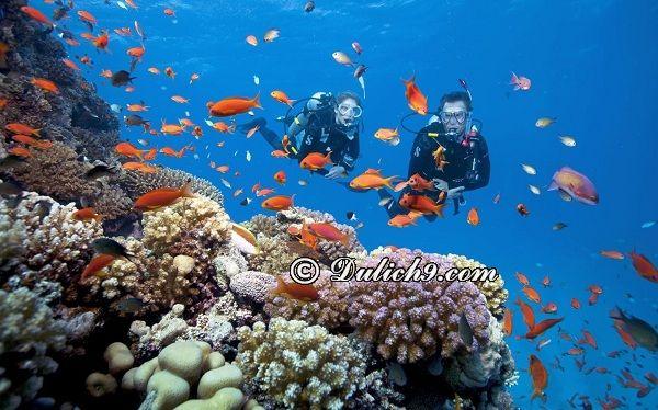 Chơi gì ở Rạn Nam Ô/ Điểm tham quan hấp dẫn ở Rạn Nam Ô; Kinh nghiệm lặn biển ở Rạn Nam Ô