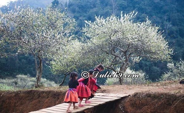 Hướng dẫn du lịch Mộc Châu mùa hoa mận: Du lịch Mộc Châu mùa hoa mận nên đi đâu chơi?