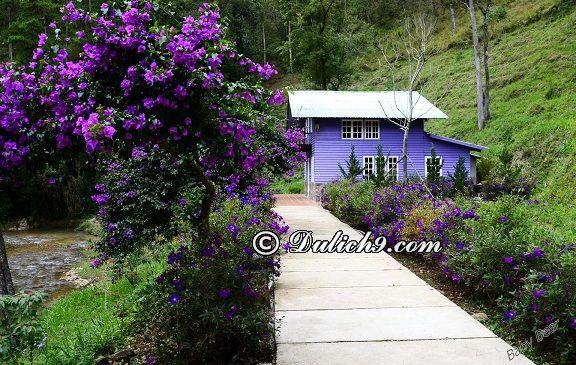 Đường đi/ hướng dẫn cách di chuyển tới Ma rừng lữ quán Đà Lạt: Cảnh đẹp ở Ma rừng lữ quán Đà Lạt