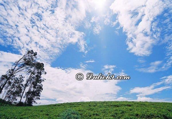 Hướng dẫn đi đồi chè Cầu Đất Đà Lạt: Danh lam thắng cảnh đẹp ở đồi chè Cầu Đất Đà Lạt