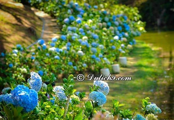 Hướng dẫn tham quan vườn hoa thành phố Đà Lạt: Những loài hoa có trong vườn hoa thành phố Đà Lạt