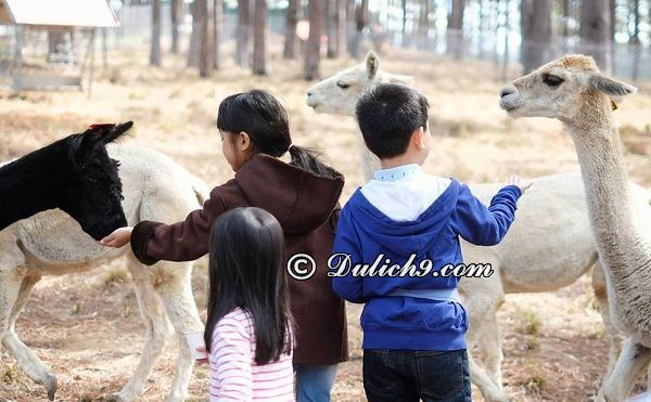 Kinh nghiệm đi vườn thú Zoodoo Đà Lạt: Hướng dẫn đi tham quan, vui chơi khi du lịch Zoodoo Đà Lạt