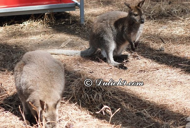 Các lưu ý khi tham quan vườn thú Zoodoo Đà Lạt: Du lịch vườn thú Zoodoo Đà Lạt có gì hấp dẫn, thú vị?