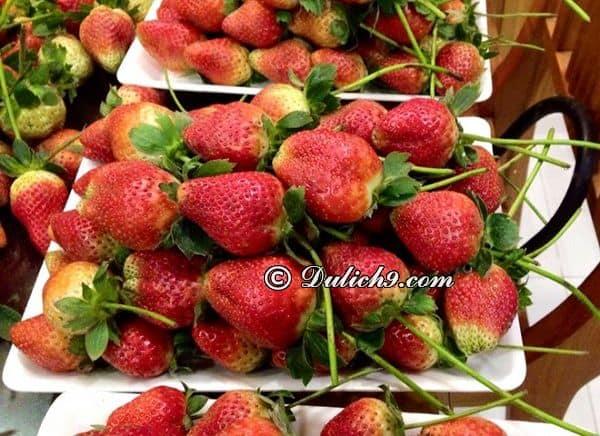 Các loại rau củ quả - đặc sản nổi tiếng ở Đà Lạt: Mua đặc sản gì ở Đà Lạt? Địa chỉ mua đặc sản Đà Lạt uy tín, chất lượng nhất