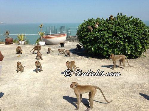 Hua Hin có địa điểm du lịch nào hấp dẫn? The monkey mountain Khao Takiab/ Du lịch Hua Hin nên đi đâu chơi, tham quan?