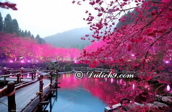 Tour du lịch Cao Hùng - Đài Nam - Gia Nghĩa - Đài Trung - Đài Bắc 5 ngày 4 đêm