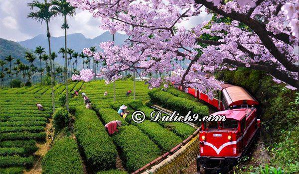 Du lịch Đài Loan vào mùa nào, tháng mấy đẹp nhất? Thời điểm lý tưởng đi du lịch Đài Loan