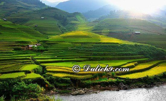 Du lịch Hoàng Su Phì mùa lúa chín vàng rực: Tây Bắc có cánh đồng lúa chín nào đẹp, nổi tiếng?