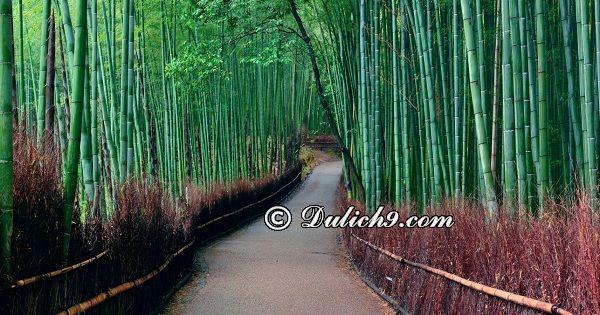 Lịch trình du lịch Nhật Bản 5 ngày tự túc: Kinh nghiệm du lịch, khám phá Nhật Bản trong 5 ngày