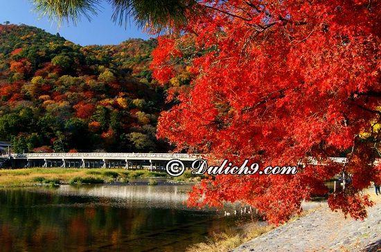 Lịch trình khám phá Kyoto buổi sáng: Kinh nghiệm du lịch Kyoto trong 1 ngày