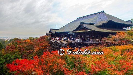 Lịch trình khám phá Kyoto buổi trưa & chiều: Kinh nghiệm du lịch Kyoto 1 ngày
