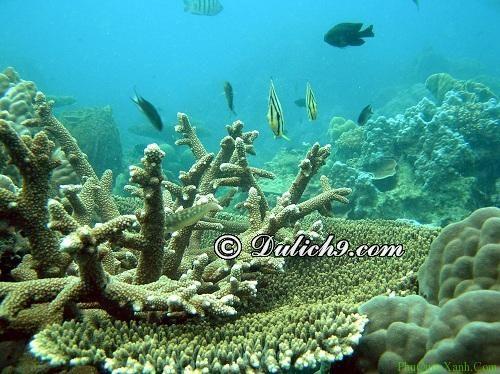 Lựa chọn địa điểm đẹp lặn ngắm san hô ở đảo Phú Quốc: Lặn biển ngắm san hô ở đâu khi du lịch Phú Quốc và chi phí bao nhiêu?