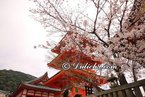 Đền Kiyomizu/ ngôi đền nổi tiếng ở Kyoto: Nên đi đâu chơi khi du lịch Kyoto?