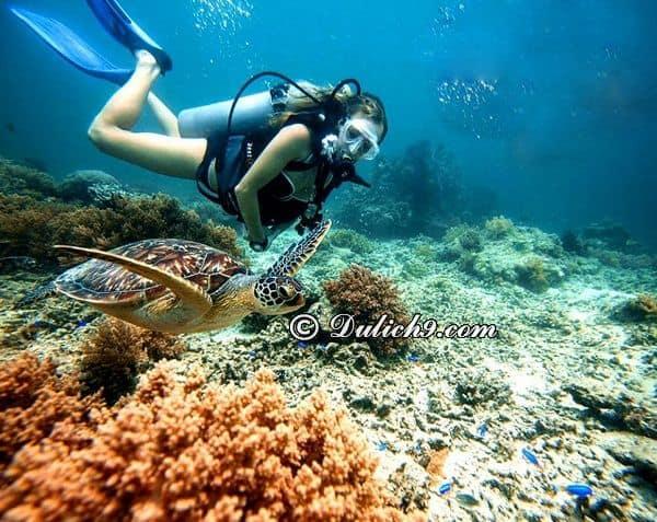 Du lịch Cù Lao Chàm 2 ngày 1 đêm chơi gì vui? Lặn biển ngắm san hô ở Cù Lao Chàm