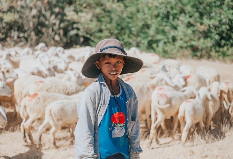 review du lịch Ninh Thuận, đồng cừu An Hòa