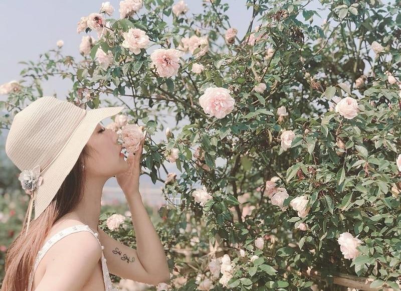 Sapa có gì đẹp? Những địa điểm đẹp ở Sapa, vườn hồng cổ Sapa