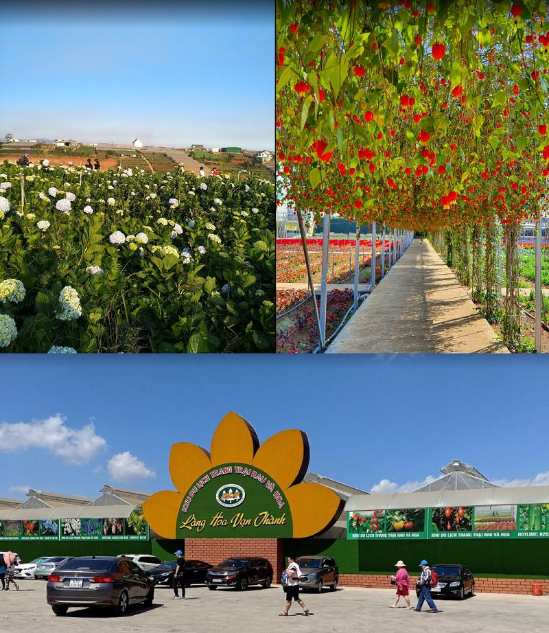 Địa điểm du lịch đẹp ở Đà Lạt. Làng hoa Vạn Thành