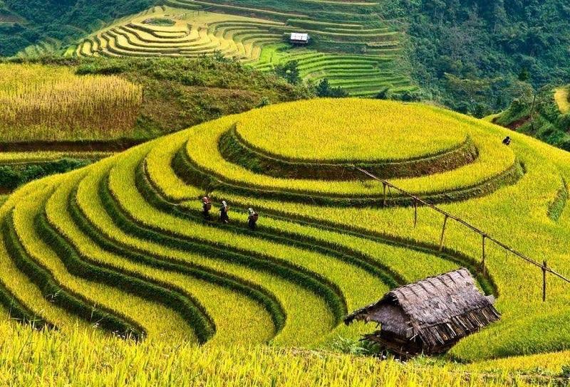 Địa điểm du lịch Mù Cang Chải, cánh đồng mâm xôi Lớn