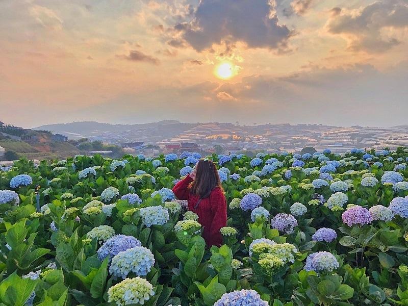 Cánh đồng hoa Cẩm Tú ở cầu Mới - Điểm du lịch sống ảo hot nhất ở Đà Lạt