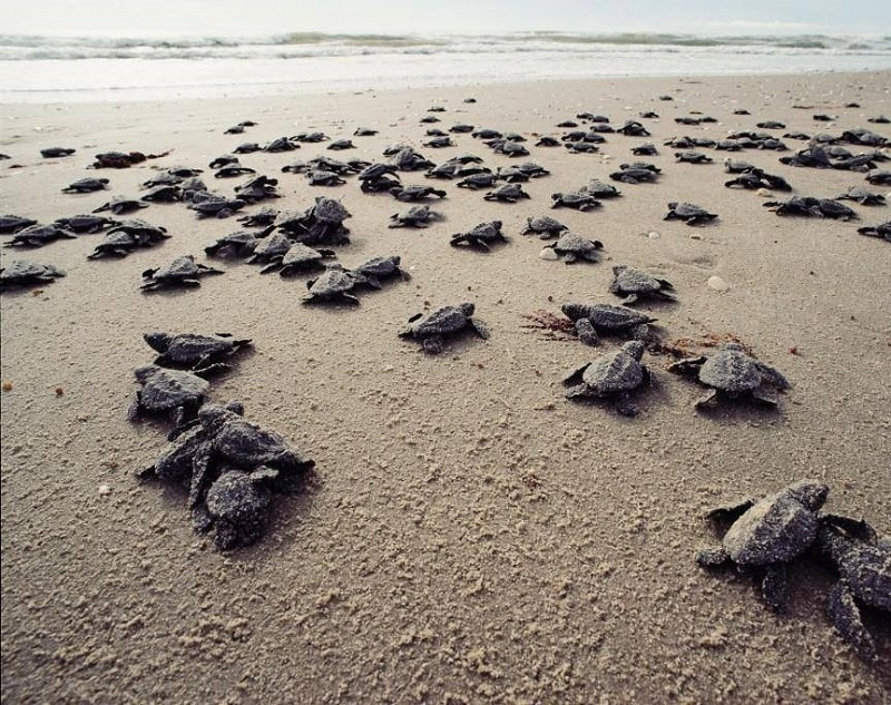 Thời gian tuyệt nhất mà bạn nên đến Côn Đảo