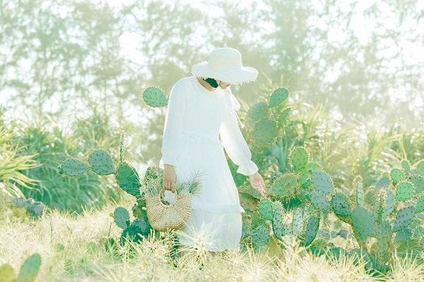 Chụp ảnh ở cánh đồng xương rồng Đà Nẵng