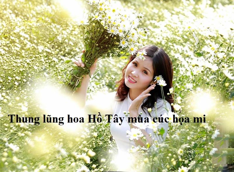 Check in thung lũng hoa Hồ Tây mùa hoa cúc họa mi