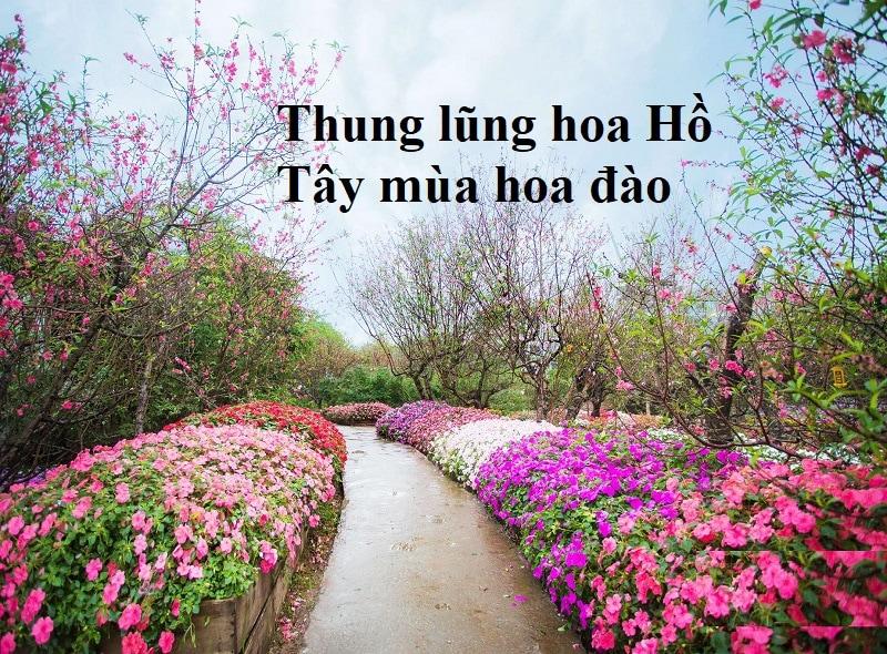 Check in thung lũng hoa Hồ Tây mùa hoa đào