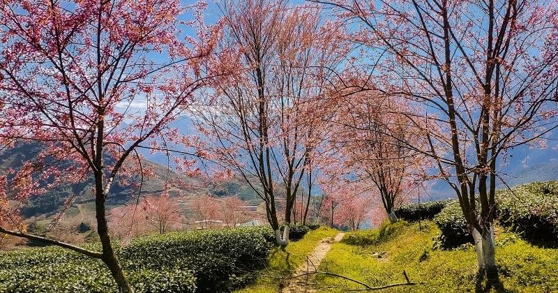Cảnh đẹp Sapa mùa xuân