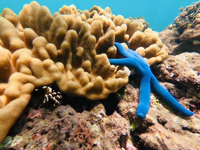 Chơi gì ở Cù Lao Xanh? Trải nghiệm lặn ngắm san hô ở Cù Lao Xanh